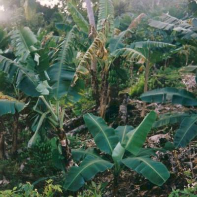 Faune et flore des Comores